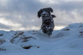 Buddy the dog in the Galloway Hills