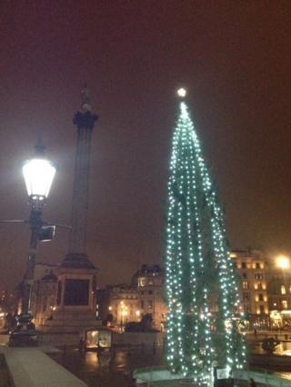Trafalgar Tree