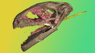 CB-scan-of-an-albenerpetontid-fossil-skull