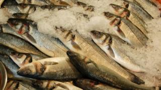 Welsh bass stocks could face collapse