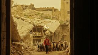 Halep'in daha önce muhaliflerin elinde olan Bâb-ı Kınnesrin mahallesinde bir çocuk koyunlarıyla yürüyor