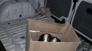 The puppies were turned back from ferries at Larne and Belfast in the run up to Christmas
