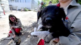 Çernobil ve köpekler
