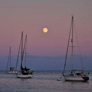 Yachts at West Mersea in Essex