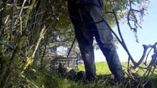 Still of badger in a cage