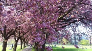 Edinburgh's Meadows