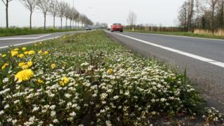 Plantas crescendo entre as pistas de uma estrada