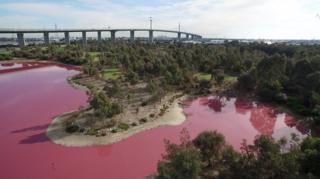 Солоне озеро в Мельбурні тимчасово стало рожевим