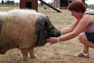 Valerie Luycx with Pastis, a 10-year-old Vietnamese pig