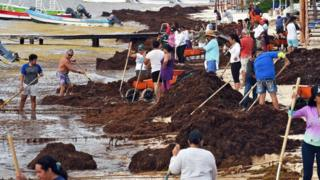 Residents remove Sargassum in Puerto Morelos, Quintana Roo state