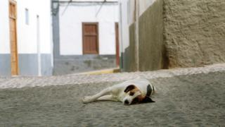 Dog lies down during afternoon siesta