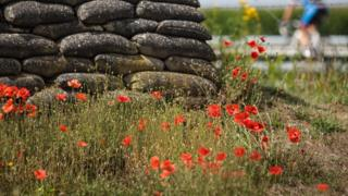 Poppies blooming in Flanders Fields.