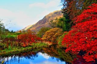 Benmore gardens, Cowal