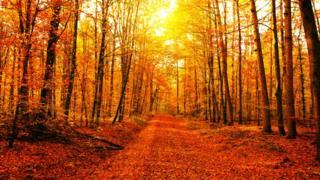 Sonbaharda yapraklarını döken ağaçlarla dolu bir patika.