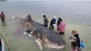Cá voi, nhựa, môi trường