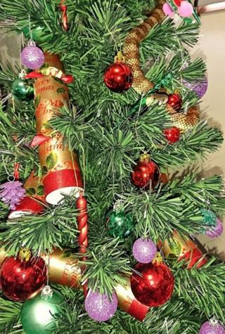 Ular di pohon natal