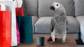 A parrot with shopping