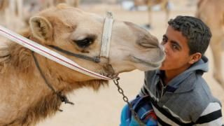 An Egyptian young jockey kisses his camel near the starting line during the opening of the International Camel Racing festival at the Sarabium desert in Ismailia.