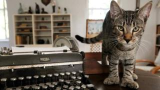 A six-toed cat descended from a tomcat named Snow White that the acclaimed American author Ernest Hemingway adopted while he lived at the property in Key West, Florida, in the 1930s