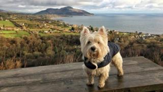 Casper the dog in Arran