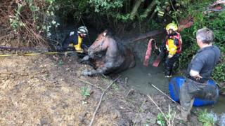 Max the horse in the ditch
