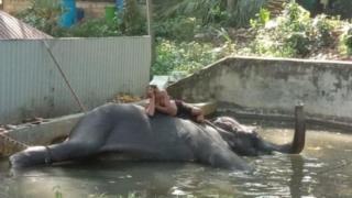 gajah, sri lanka