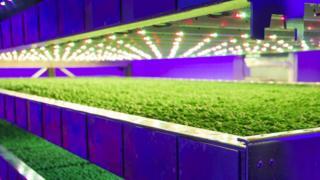 IGS vertical farm