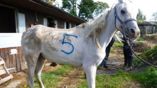 Emaciated horse at Nicola Haworth's stables