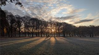 A shot of the sunrise through tress on a frosty morning.