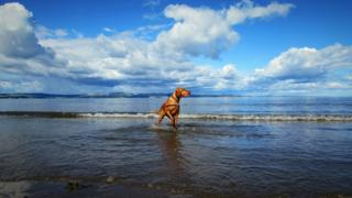 Dog paddling in water at a beach