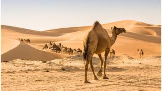 沙子,环境,地球,气候