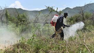 Man sprays to disperse pesticide in a bush
