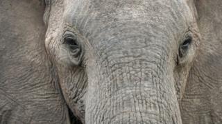 Primer plano de elefante.