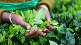 Nanoparticles from tea leaves 'destroy lung cancer cells'
