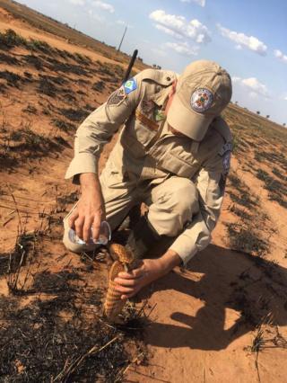 Sargento do Corpo de Bombeiros Pedro Ribas Alves dá água a tatu após incêndio em cerrado no Mato Grosso