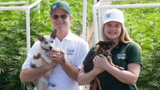 Alison Ettel e seu sócio Harry Rose com dois cachorros
