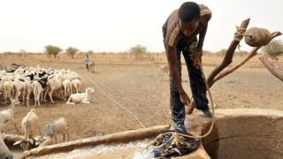 La pluviométrie et les attaques de chenilles seraient à l'origine de cette situation qui touche les pasteurs et les agro-pasteurs.