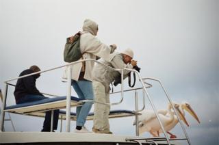 People photograph pelicans
