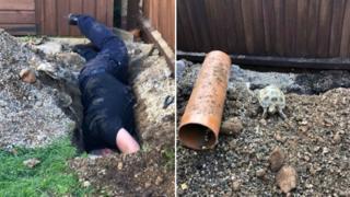 RSPCA officer digging for tortoise