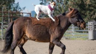Dally the Jack Russell and horse show their incredible bond as pooch rides pal bareback