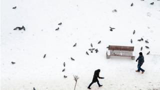 Pessoas e pombos na neve