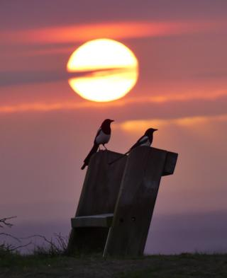 Two magpies at sunrise