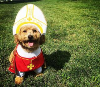 A small dog sitting on the grass in red vestment and white mitre