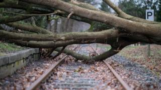 "An uprooted tree lays on the rails in Muenster, northwestern Germany, on January 18, 2018, as many parts of the country are hit by cyclone ""Friederike""."
