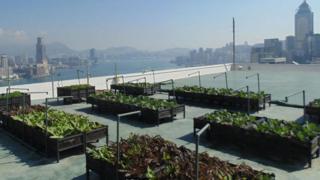 نباتات مزروعة في صناديق خشبية فوق سطح أحد المباني