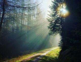 Bosque de Hamsterley