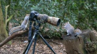 Squirrels with a camera