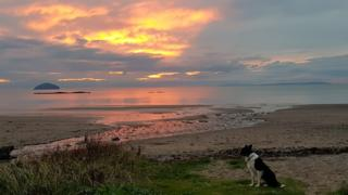 Sunset over Aisla Craig with Border Collie dog