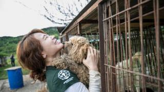 HSI representative holds Korean dog