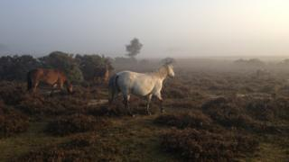 The New Forest generic